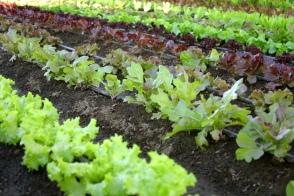 Organic Vegetable Garden - K&K Superblend Fertilizer for Organic Crops